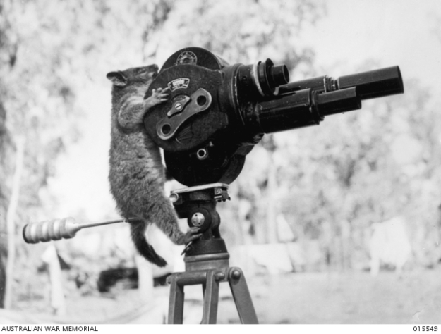 Possum with Film Camera