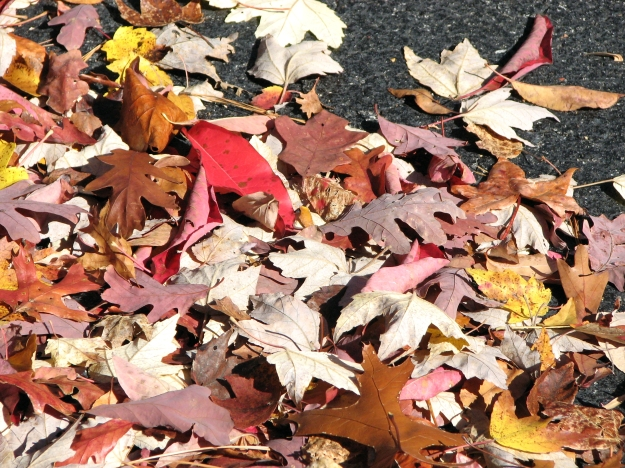 Autumn Leaves on Sidewalk