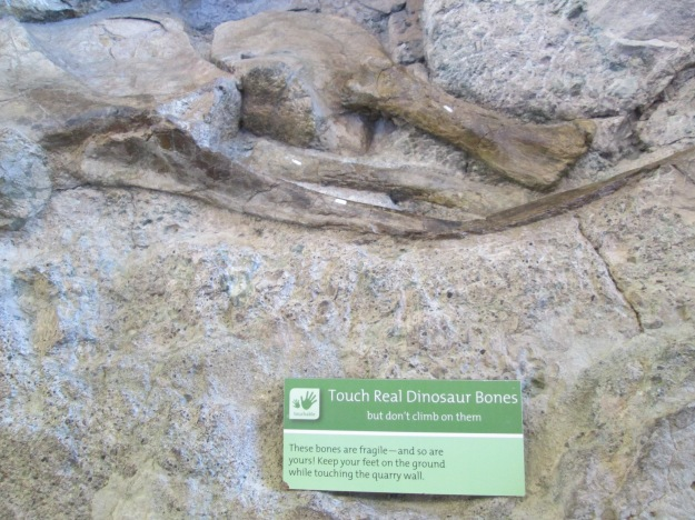 Dinosaur Don't Touch