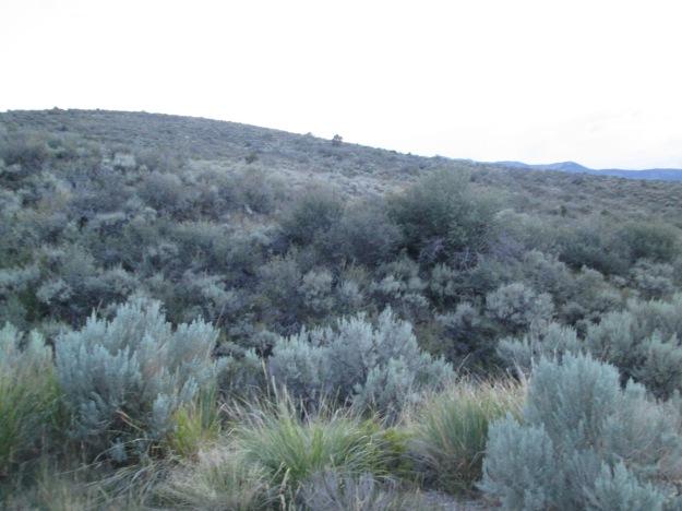Nevada Landscape 2