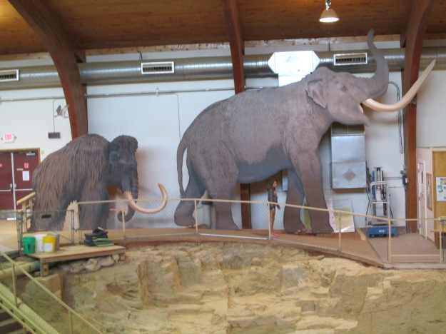 The better-known woolly mammoth paled in size compared to the much larger Columbian mammoth.